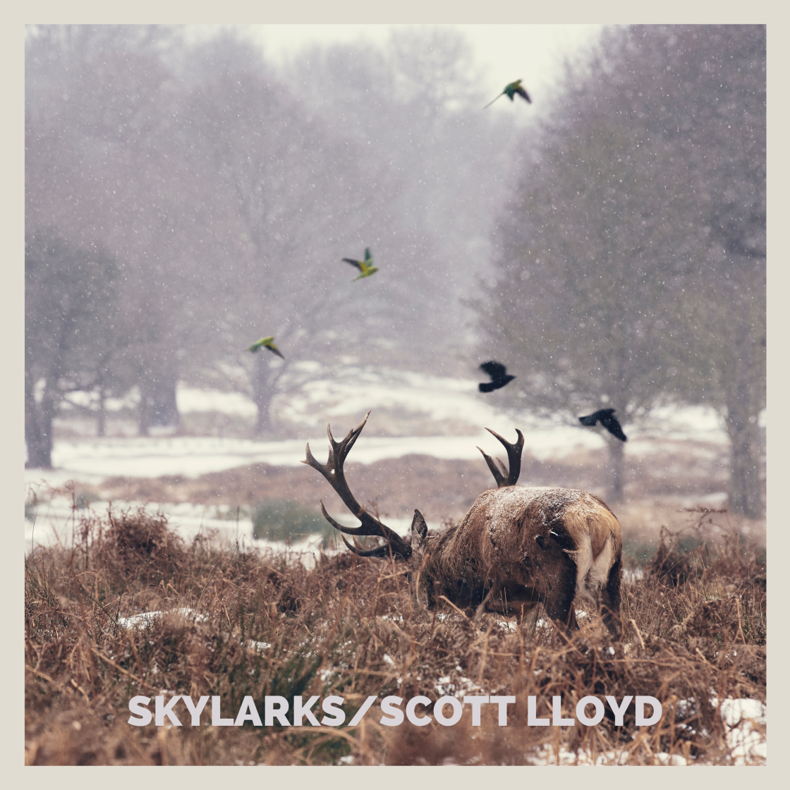 Skylarks - Single Artwork
